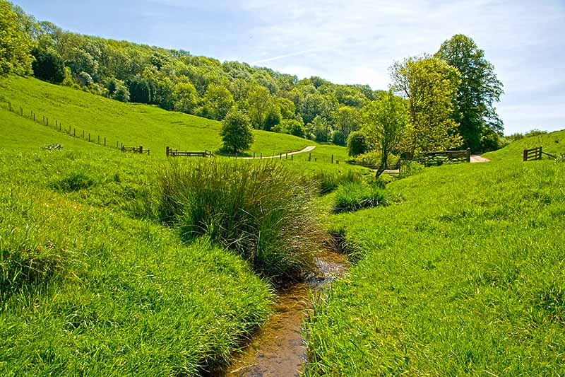 Stream in the Cotswolds