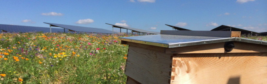 Solar farm flowers and hive