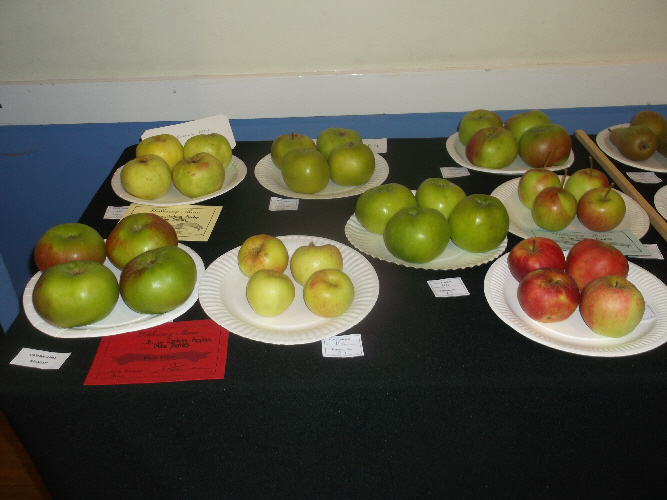 Willersey Show Apples