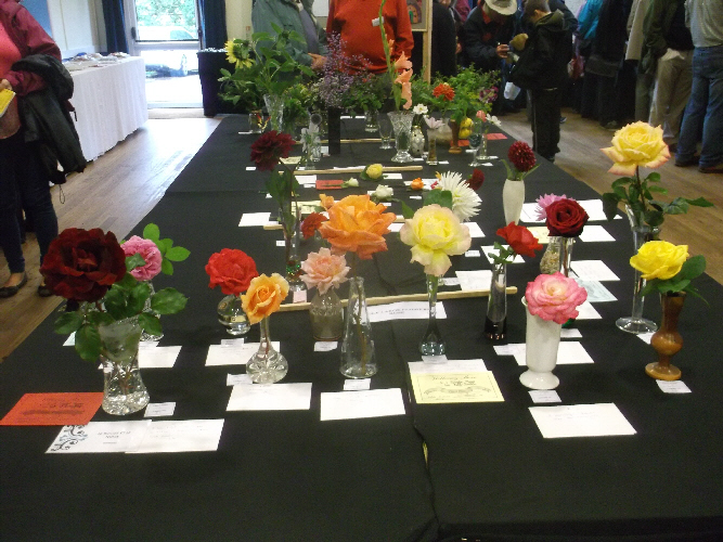 Willersey Show Roses