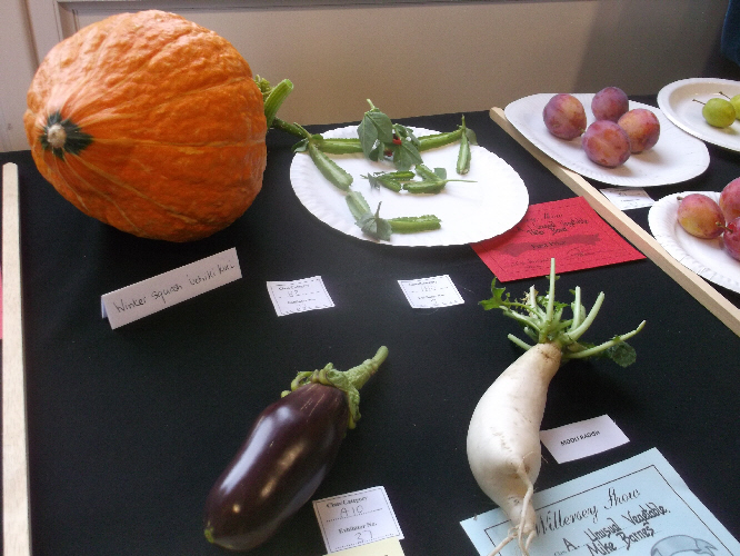 Willersey Show Unusual Vegetables