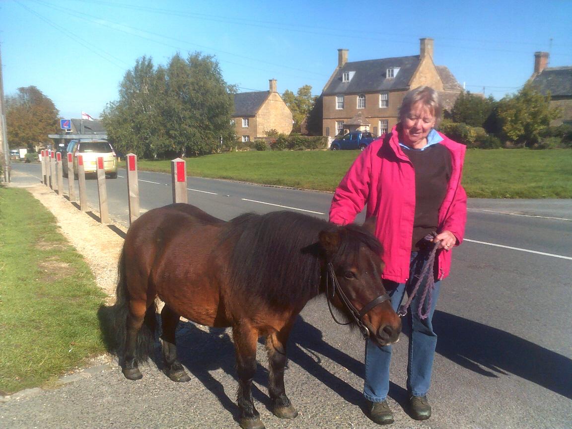 Sweet lttle horse in Willersey