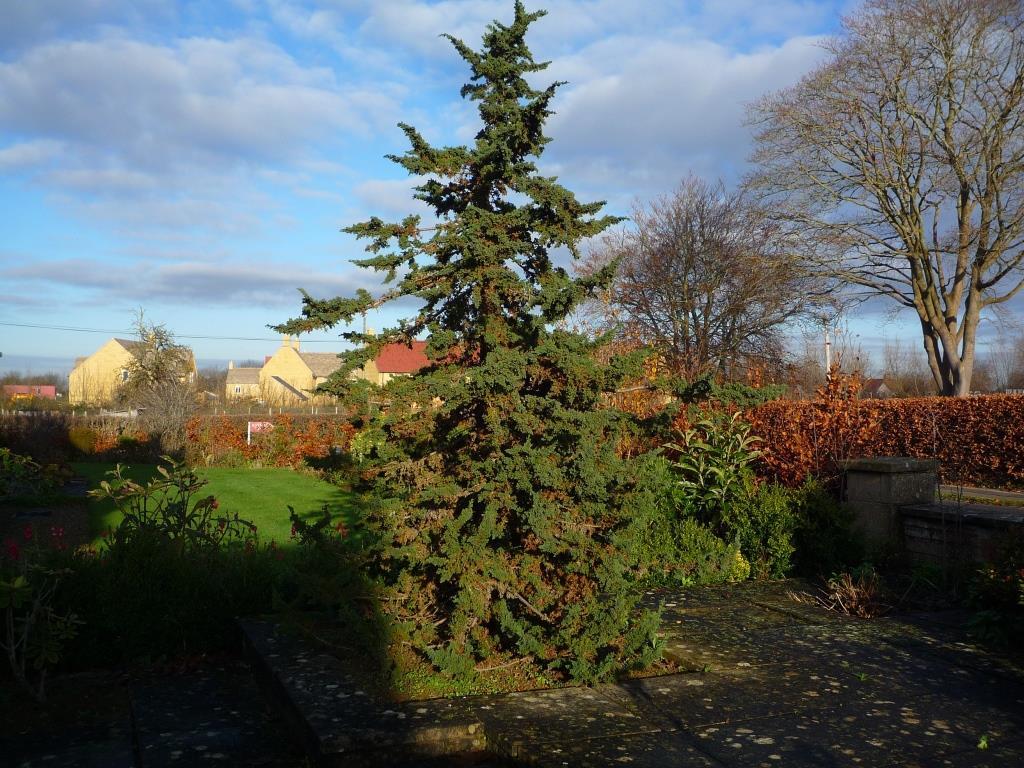Tree 067