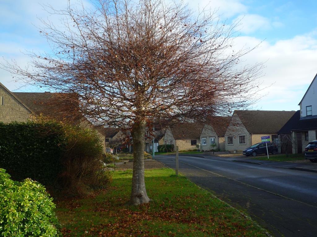 Tree 082