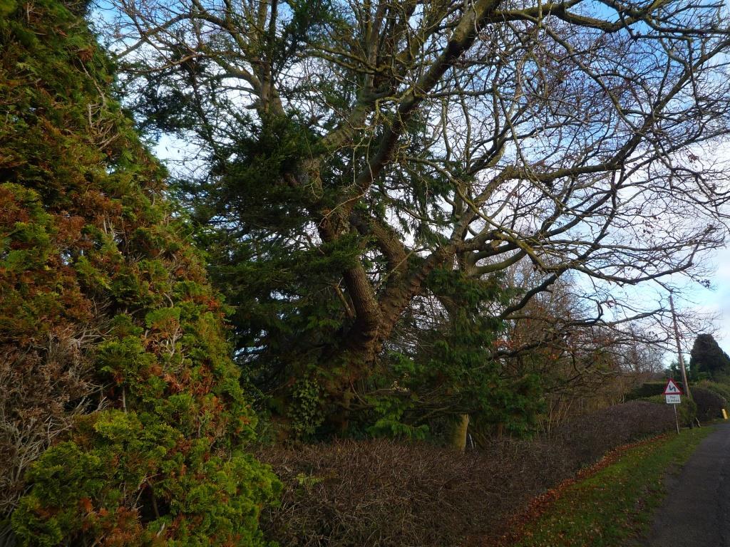 Tree 083