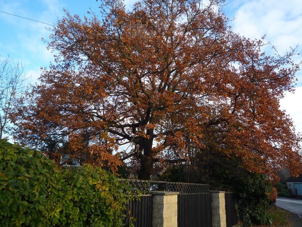 Tree 084