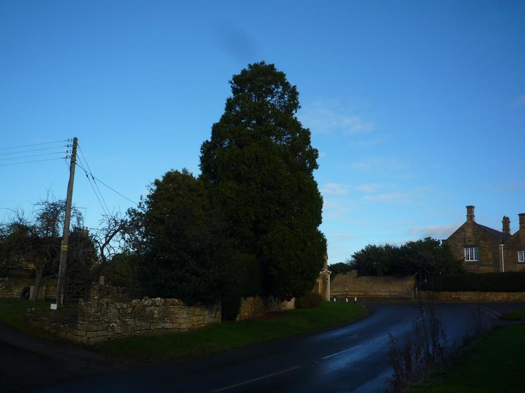 Tree 087