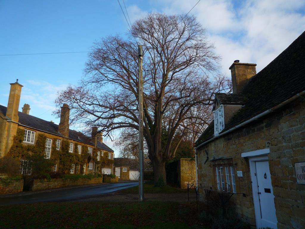 Tree 088