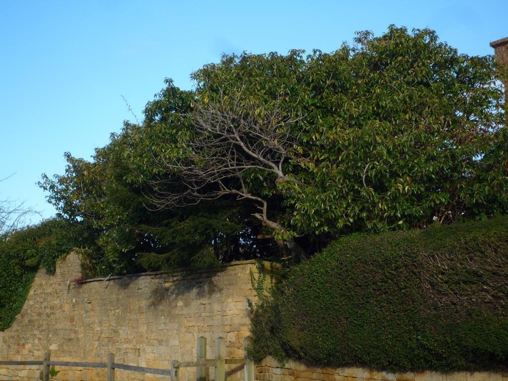 Tree 089
