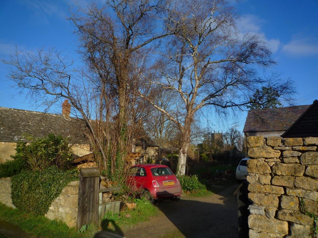 Tree 096
