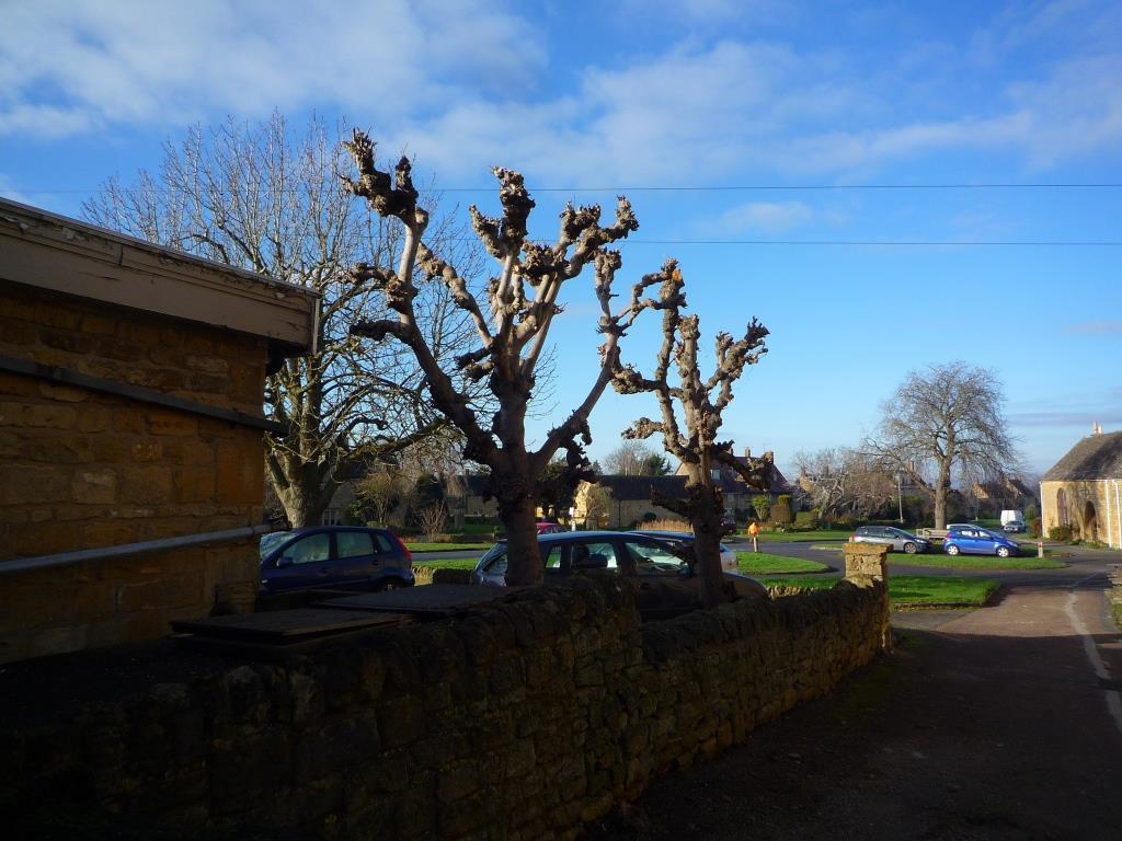 Tree 099