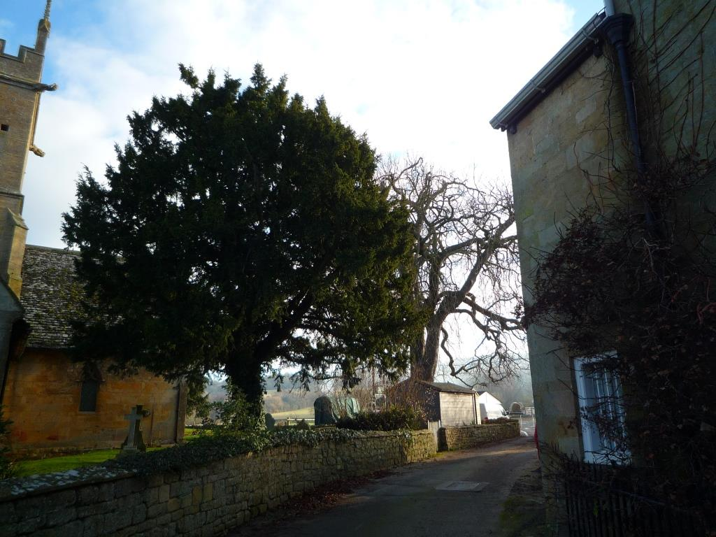 Tree 107