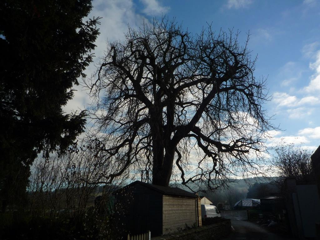 Tree 109