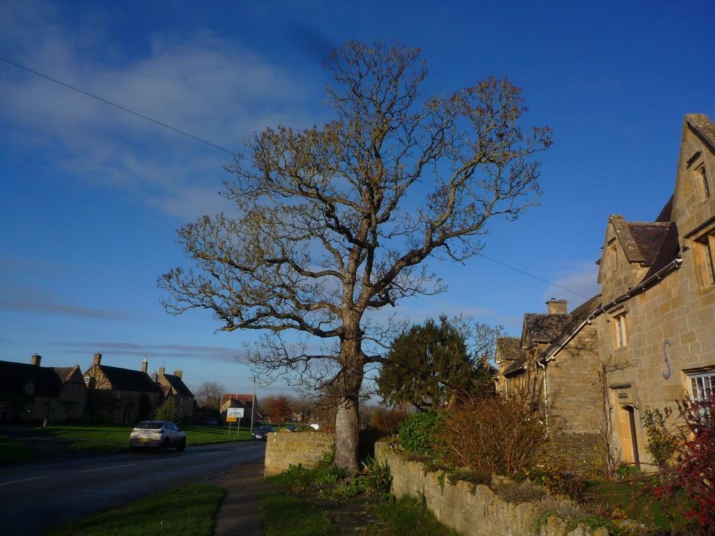 Tree 117
