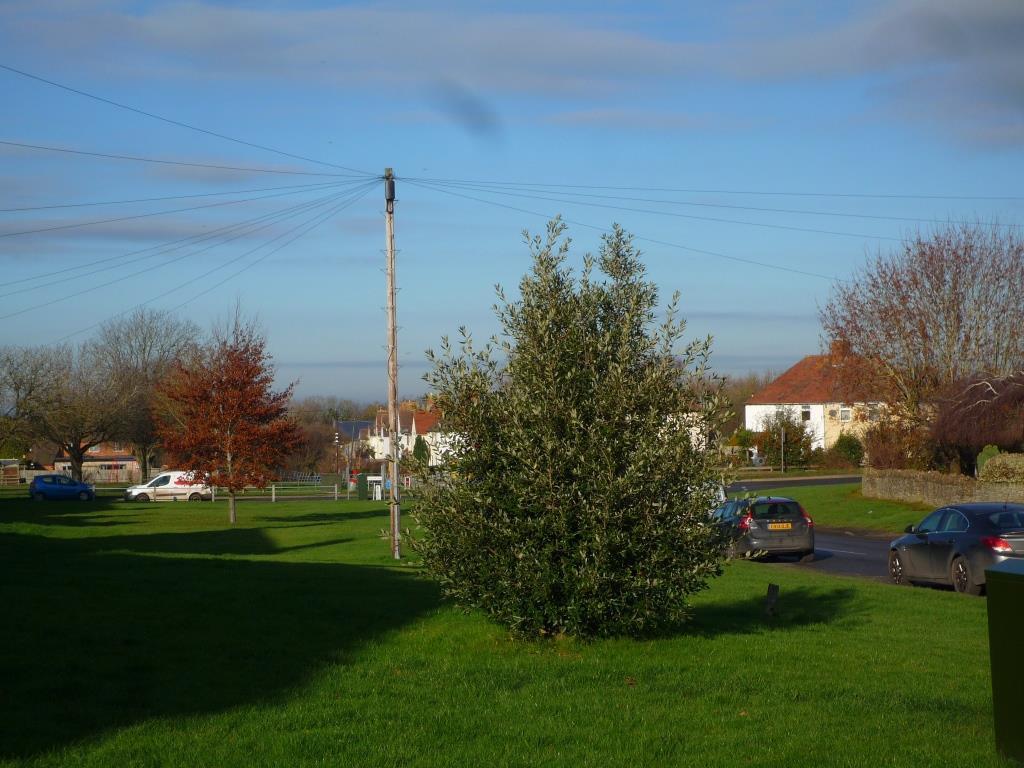 Tree 121