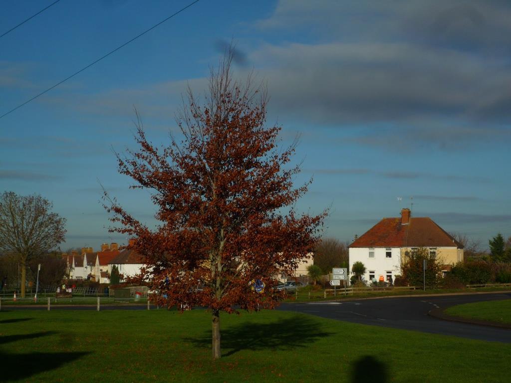 Tree 124