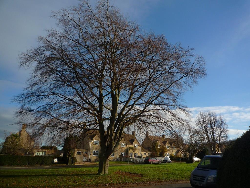 Tree 131