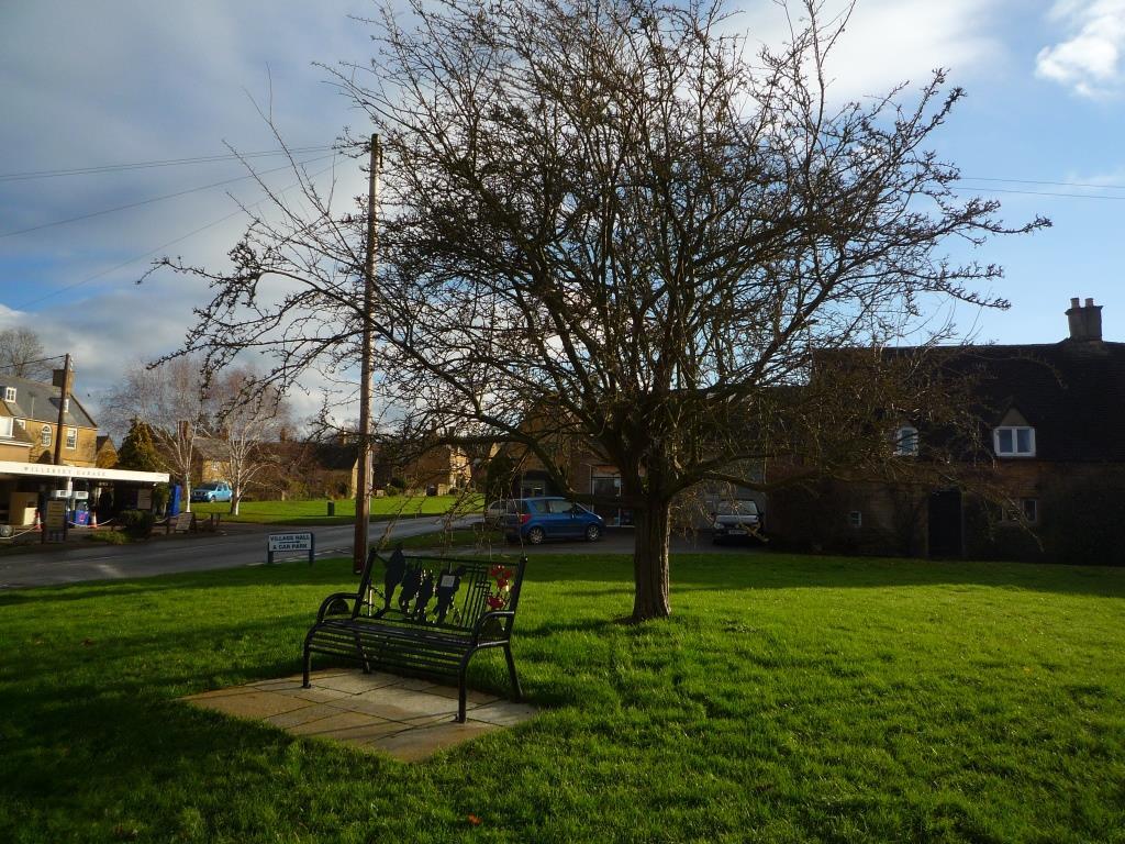 Tree 137