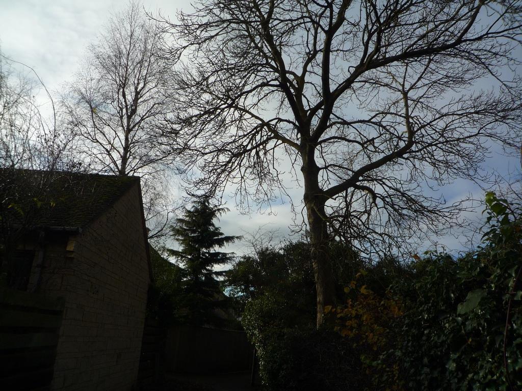Tree 143