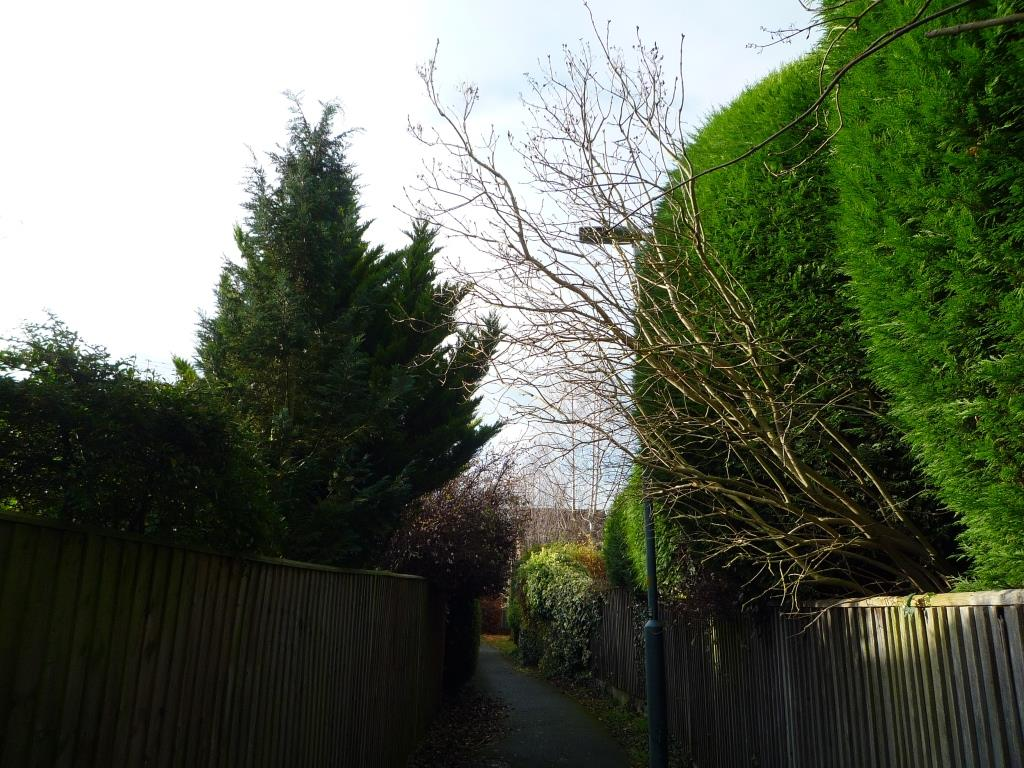 Tree 146