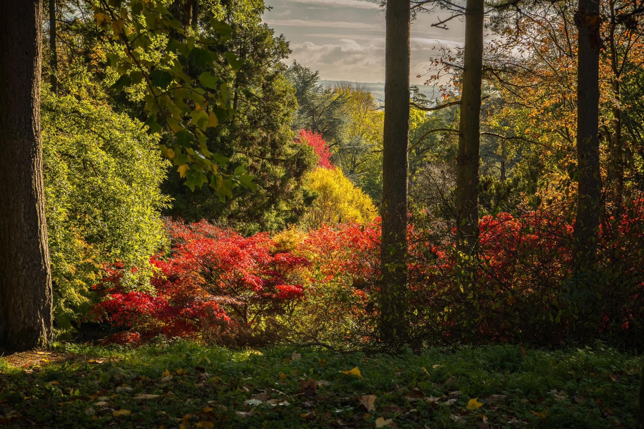 Autumn Tree 002