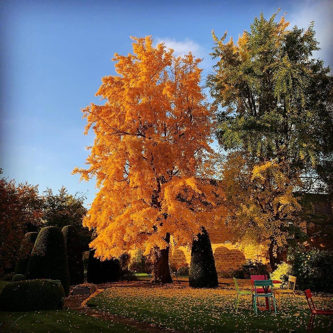 Autumn Tree 003