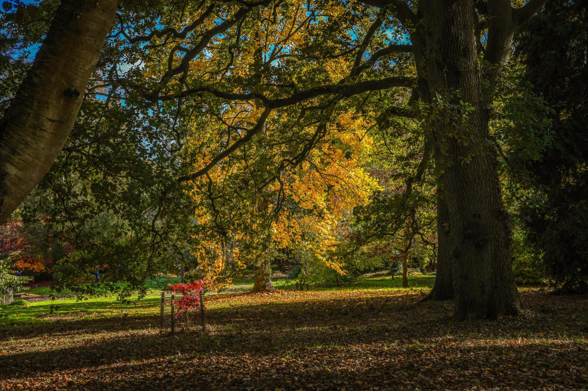 Autumn Tree 005