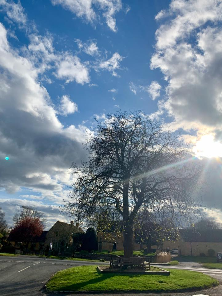 Jubilee tree with amazing sky